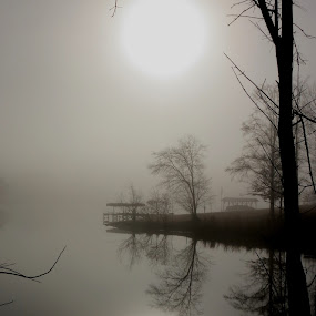 Foggy Mirror by Ruby Stephens - Landscapes Waterscapes ( reflection, lake greenwood sc, waterscape, fog, trees, lake, mirror image, dock )