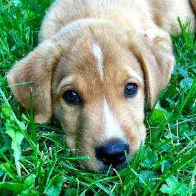 Moris by Jillynn Markle - Animals - Dogs Puppies ( animals, puppies, puppy, cute )