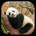 Lazy Panda Live Wallpapers icon