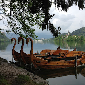 Lake Bled Slovenia by Dawn Simpson - Landscapes Waterscapes ( water, swans, church, waterscape, boats, slovenia, travel, landscape, lake bled,  )