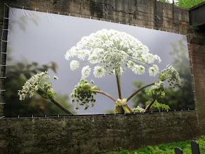 Photo: Landschaftspark Duisburg (Kunst.Werk2014)