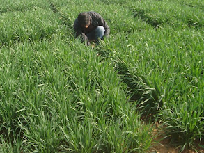 Photo: FAYA Programme Coordinator RB Khadka observing a field 2011 [Photo provided by RB Khadka]