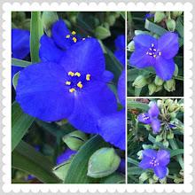 Photo: Morning blue flowers #intercer #flower #romania #blue #morning #photoshake - via Instagram, http://instagr.am/p/MAV1L9pfnr/