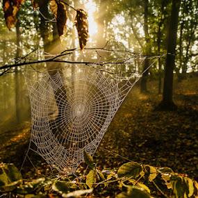 by Jeno Major - Landscapes Forests