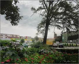 Photo: Turda, Str. Rapsodiei, Nr.3, spatiu verde, Cârciumărese (Zinnia elegans) - 2018.07.08