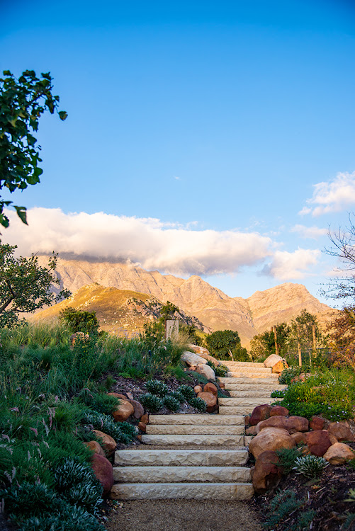 Bosjes Estate's gardens were designed by Square One Landscape Architects.