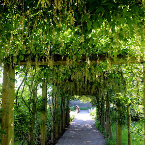 Blarney Castle grounds by Janet Smothers - City,  Street & Park  Historic Districts