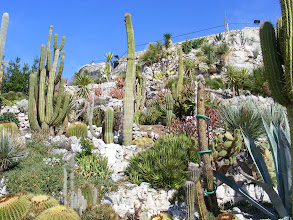 Photo: Surrounding the summit is the Exotic Garden, with many succulent plants, designed by the agronomist Jean Gastauud in 1949.