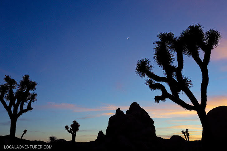 Joshua Tree National Park (15 Most Popular Los Angeles Day Trips).