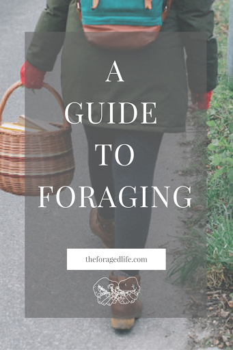 A Guide to Foraging - What it is and how to do it | Foraging is the search for wild food and can be an amazing hobby when you dive into it and do it right. There are a few helpful tips to stick by to do it well and ensure you protect yourself and the environment as you do it though. Check out this guide for how! | By The Foraged Life