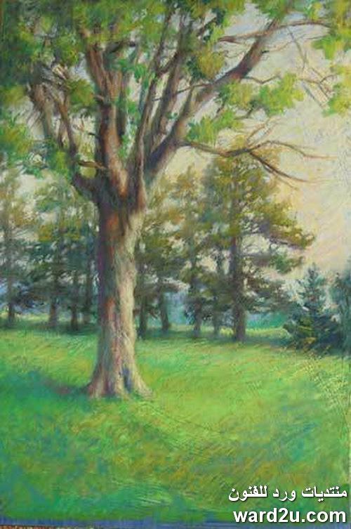 لوحات بالباستيل طبيعه صامته و مناظر خارجيه