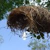 Ninho de pássaro