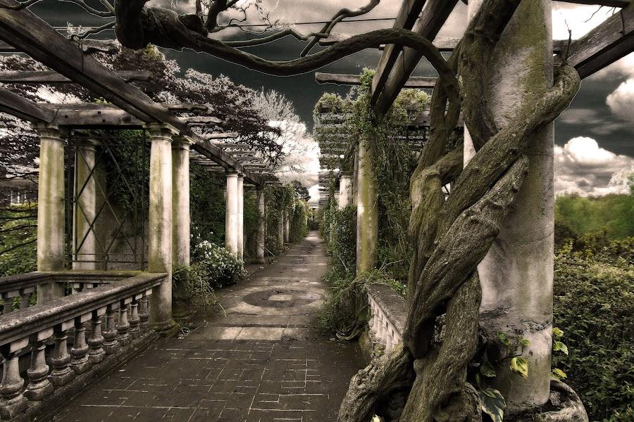 pergola by Almas Bavcic - City,  Street & Park  City Parks