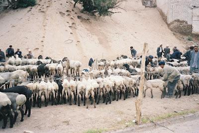 尻を向けて並ぶ羊