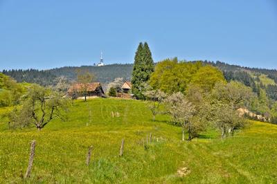 Schwarzwaldidylle und der Hochblauen im Hintergrund