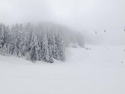 Abeti nella nebbia di Andri55