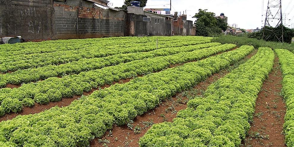 Agricultura Urbana no Brasil (Fonte: Universo da TV/Reprodução)