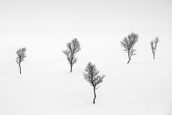 A group of trees in a snowy area  Description automatically generated with medium confidence