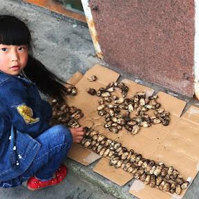 【秘境グルメ】松茸だらけの松茸村に行ってみた / 松茸を投げ売り「高級食材を数十円で購入可能」