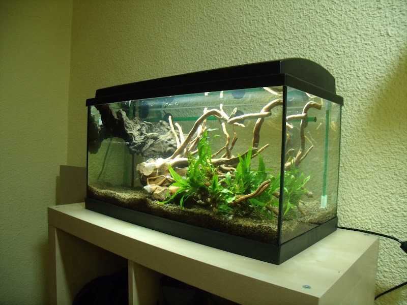 Very Cheap Aquarium Table   DIY Aquarium Projects   Aquatic Plant Central
