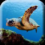 Green sea Turtle Live Wallpap