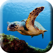 Green sea Turtle Live Wallpap