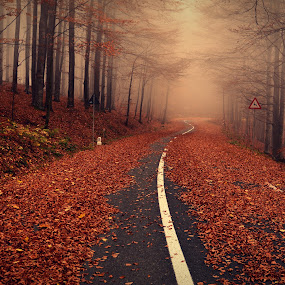what lies ahead by Rux Georgescu - Landscapes Forests ( mistery, autumn, trees, autumn colours, rusty, road, leaves, misty, mist )