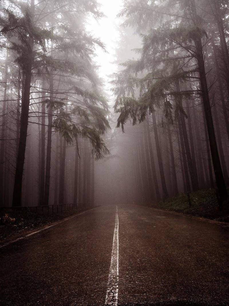La strada nebbiosa di Sebastiano Pieri