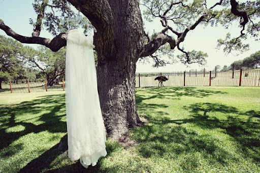 Best Ivory Bridal Gown Hanging