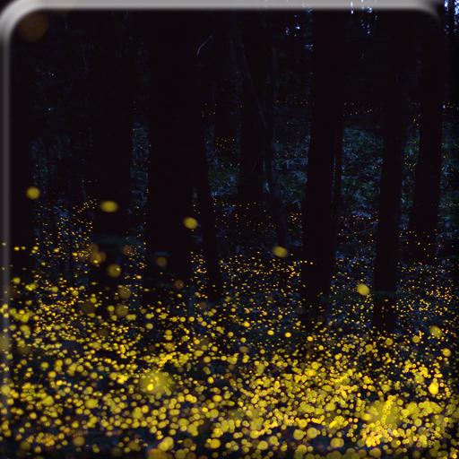 叢林螢火蟲動態桌布 個人化 App LOGO-APP試玩
