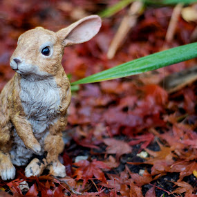 Bunny by Scott Hemenway - Artistic Objects Toys ( rabbit, bunny, toy, ornament, wet, leaf )