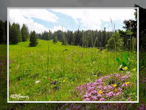 Photo: Thym précoce (Thymus praecox) aux alpages du Mont de Baumes