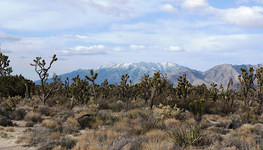 Photo: Teutonia Peak is on the right side. Joshua trees in the foreground.
