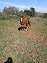 Photo: Horse 5