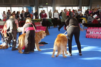 Photo: on the left baby class male Kliford Tornádo Erben, on the right puppy class male Zoco de Buxionte