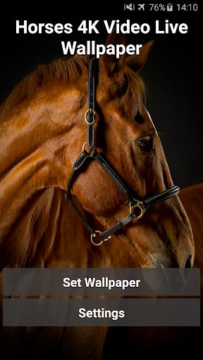 Horses 4K Video Live Wallpaper