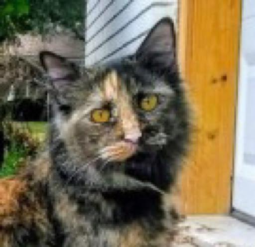 Sylvia Conatser's avatar