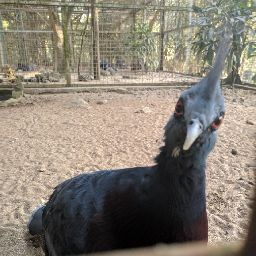 user Ari Ramadhan apkdeer profile image