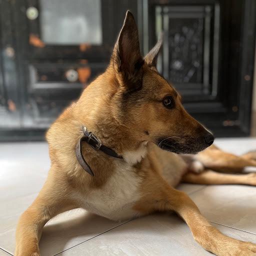 Jeremy Charpentier avatar.