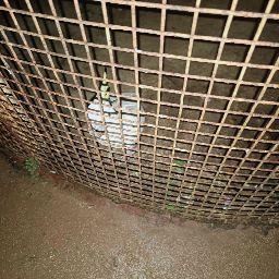 user avinash tiwari apkdeer profile image