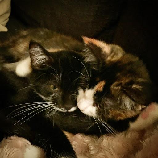 Blixten och Sally Roliga Katter