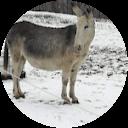 Immagine del profilo di donkey