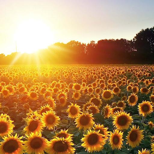 Umut's avatar