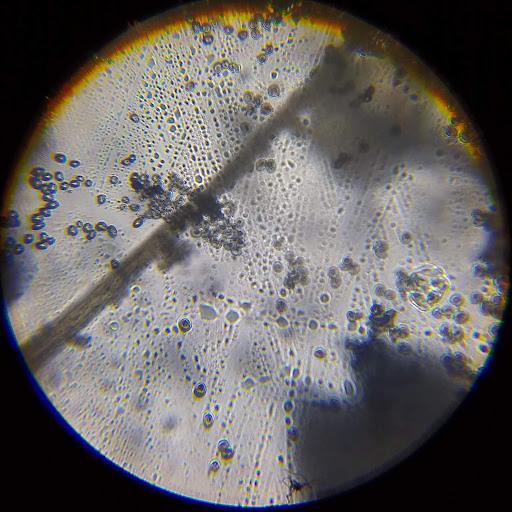 King Kavane