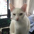 Chris Lyke's profile image