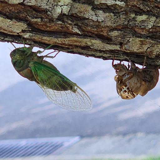 Ramesh Thyagarajan