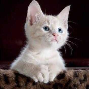 user neha sky apkdeer profile image