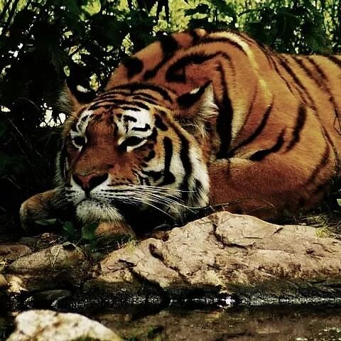 user Sunil Rajput apkdeer profile image