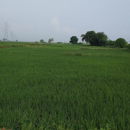 Meena Kankati