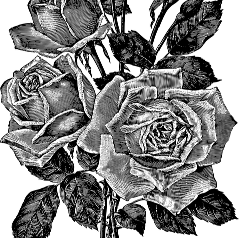 Aghiles Bacha's avatar